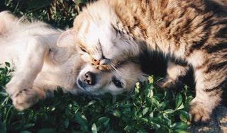 Szabad a kutyáknak macskaeledelt adni?